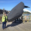 October 3, 2014 - Bar Harbor tourist docks / Bar Harbor, Hancock County, Maine) -- MaryAnne with a faux whale